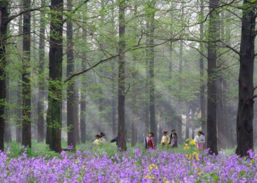 崇明东平森林公园1.jpg