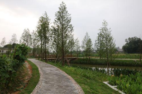 珠玑镇洋湖村