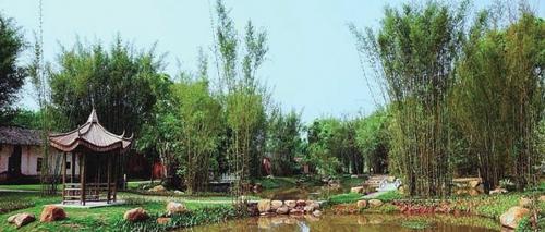 丰源村原本的竹林泥地变成小公园