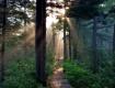 森林湿地两明珠 北国风光靓江南