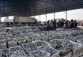 中国水产品出口额连续17年世界第一
