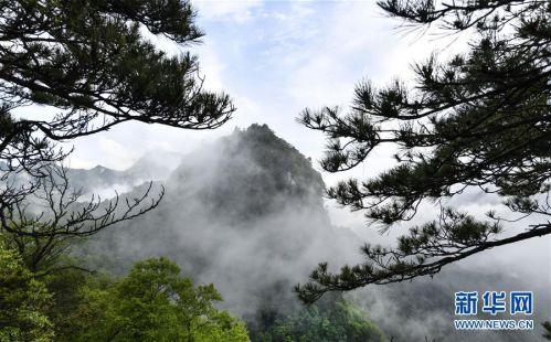 (美丽中国)(8)陕西略阳雨后初霁 森林公园美若仙境
