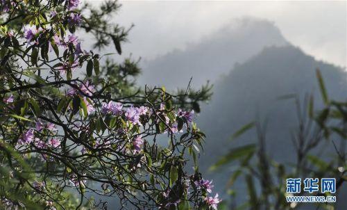 (美丽中国)(11)陕西略阳雨后初霁 森林公园美若仙境