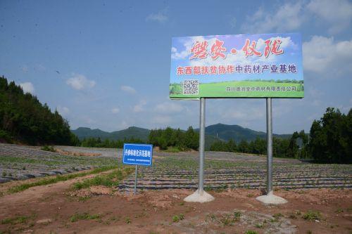 磐安仪陇东西部扶贫协作中药材产业基地之丹参标准化示范基地。