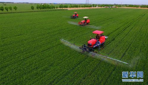 (聚焦中国经济亮点·图文互动)(7)夏粮收获近八成 丰收已成定局