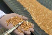 中国粮食交易大会各类粮油成交金额已超400亿元