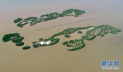 七里海湿地上的画卷