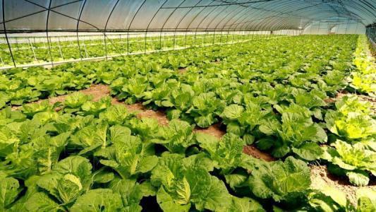 第二批国家农村产业融合发展示范园创建名单公布