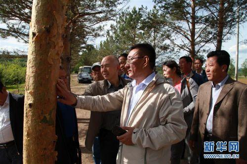 (新华全媒头条·图文互动)(4)用生命守护那片绿色——追记内蒙古大兴安岭林区干部于海俊