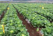 江西赣州:拟建成中部地区蔬菜发展中心