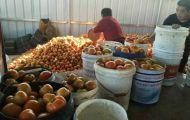 黑龙江桦南县北柳村扶贫产业番茄喜获丰收