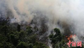 亚马逊森林大火已持续16天 外界浑然不知!