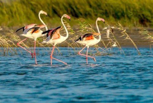 世界自然遗产喜添新成员——盐城黄海湿地