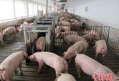 两部门:生猪规模化养殖场建设最高补助500万