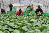 李佐军、田惠敏:我国全面部署农民合作社规范提升行动