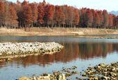 海南澄迈严肃整改富力红树湾项目环保问题 完成补种9.69亩枯死红树林