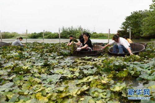 (社会)(4) 浙江湖州:秋风起 采菱忙