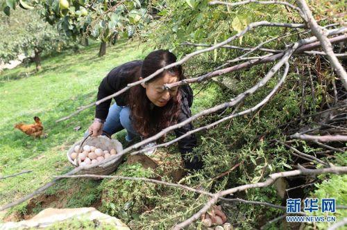 (社会)(2)建好生态林 念起致富经