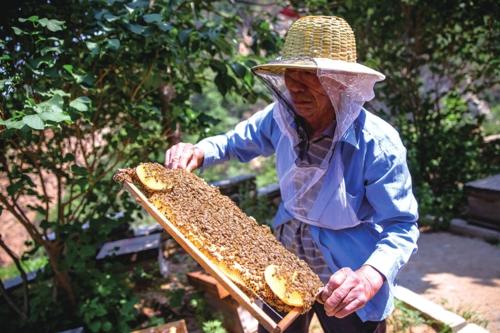 82岁的绕仕奎身体很硬朗,每天早晨5点起床,要对他的54箱蜜蜂进行巡检。中国经济导报记者苗露/摄