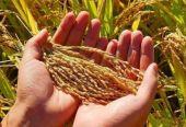 我国不断扩大粮食市场开放,维护世界粮食安全