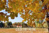 哈尔滨:为方便市民赏秋,公园落叶可延迟至11月末前清理