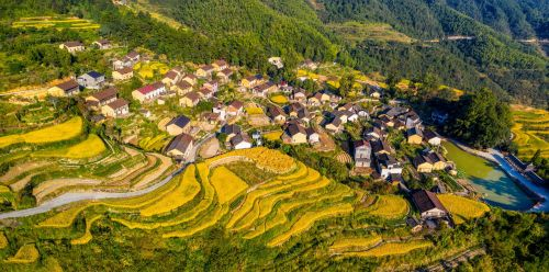 丽水风景摄影之《美丽大花园、金色新农村》(丽水市委宣传部供图,张有钢 摄)