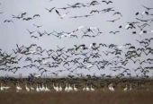 沈阳市康平县人民检察院加强湿地保护 护航候鸟迁徙