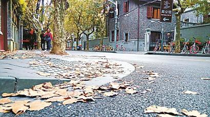 上海落叶景观道路将进入最佳观赏期 今年增至42条