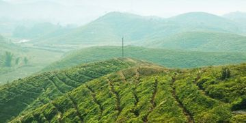 """江西赣州:打响""""赣南茶油""""品牌 激发产业发展活力"""