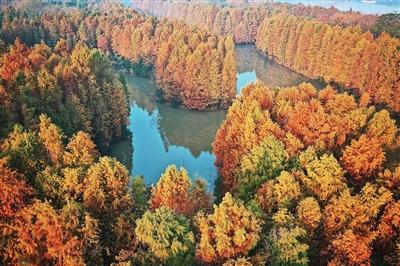 """森林公园万树""""换颜""""层林尽染"""