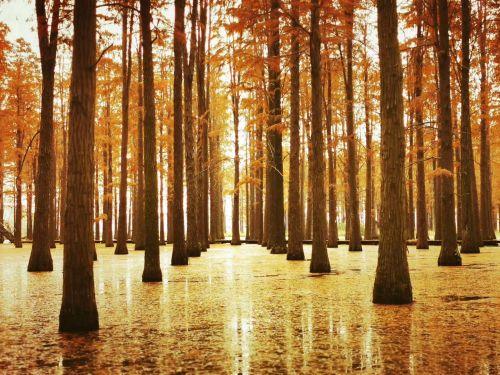 扬州高邮渌洋湖湿地公园