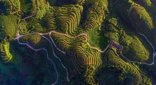 ▲安溪当地至今仍保持着自然农耕、古法制作的传统,自然生态面貌保持得非常良好。(安溪县供图)