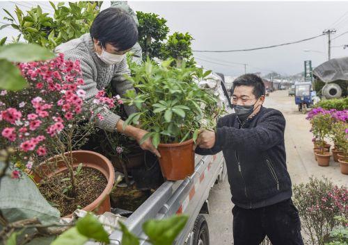 西吴联花卉市场盆花销售忙 李建林 摄