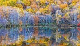 《生态林业蓝皮书》发布 我国林业指数6年增长64%