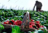 生鲜农产品流通业发展环境改善可期