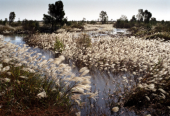 胜利油田孤东采油厂:原油生产不污染一寸湿地