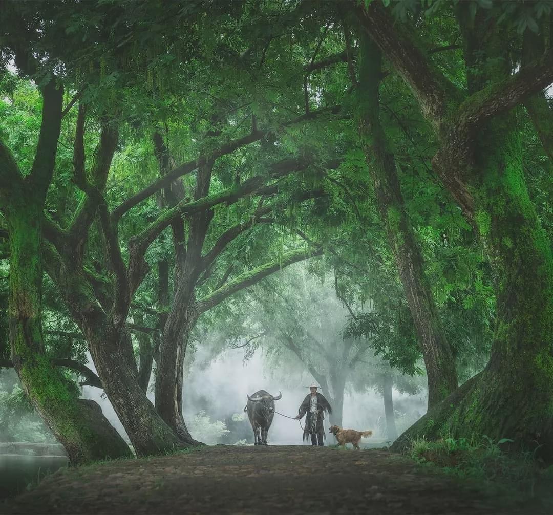 来丽水看看,这里拥有比童话更美的风景