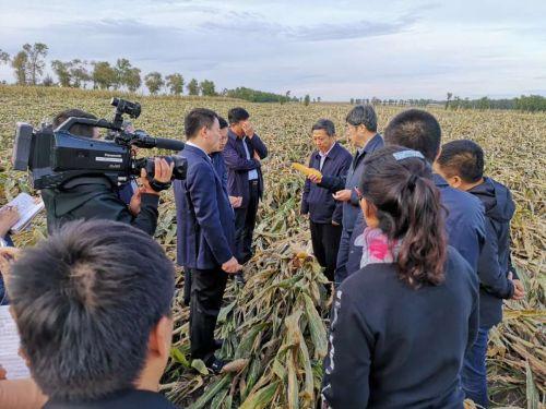 图片由双城区委宣传部提供。
