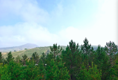 京津风沙源治理工程实施20年:天更蓝 树更绿 人民更富裕
