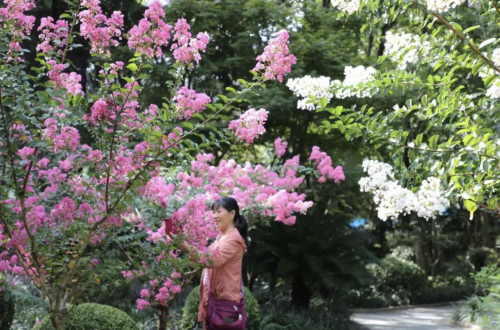 """喜迎""""双节"""",这里的空气有点甜,这里的花儿特别美~"""