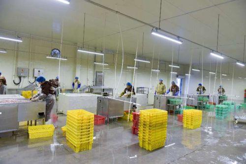 扶贫工厂--鸡肠子加工厂满负荷生产