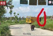 上海野生动物园发生熊伤人事件,一名工作人员死亡