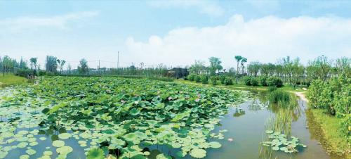 泰兴生态廊道项目湿地景观