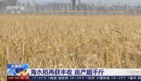 """袁隆平团队创新成果""""海水稻""""产业团体标准发布"""