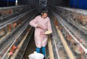 品牌养殖助增收