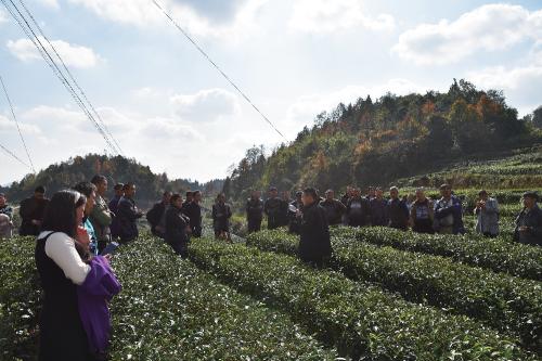耕田公司常务副总经理陈文军在庙塘坝村茶园现场给茶农们讲解欧标茶园建设会带来什么好处。