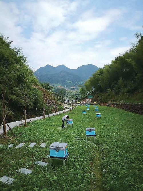 创造万色蜜园成为乡村振兴示范基地。