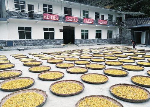 圖為東坪村茶葉加工廠。嵐皋縣鄉村振興局/供圖