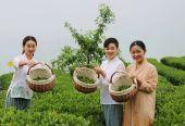 以茶促旅 以旅促茶 湖北恩施致力于茶旅融合发展探索