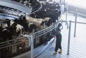 前八个月企业债券维持较高发行规模  农村产业融合发展专项债存发行空间